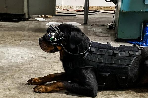 Augmented-reality-goggles-could-help-military-dogs-find-bombs-chemicals